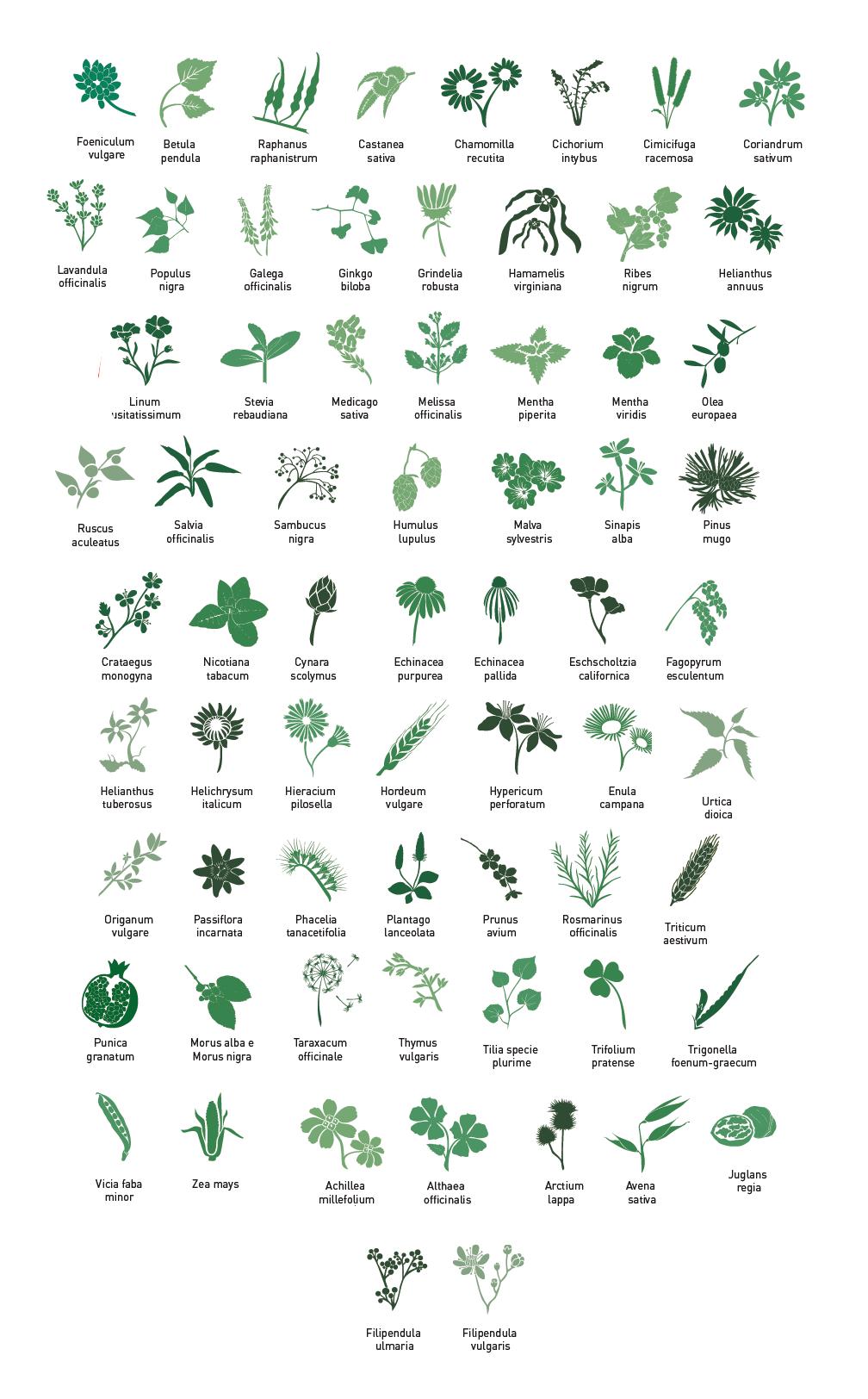 Piante Coltivate - Aboca