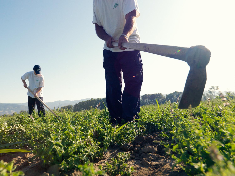 Obszar rolnictwa