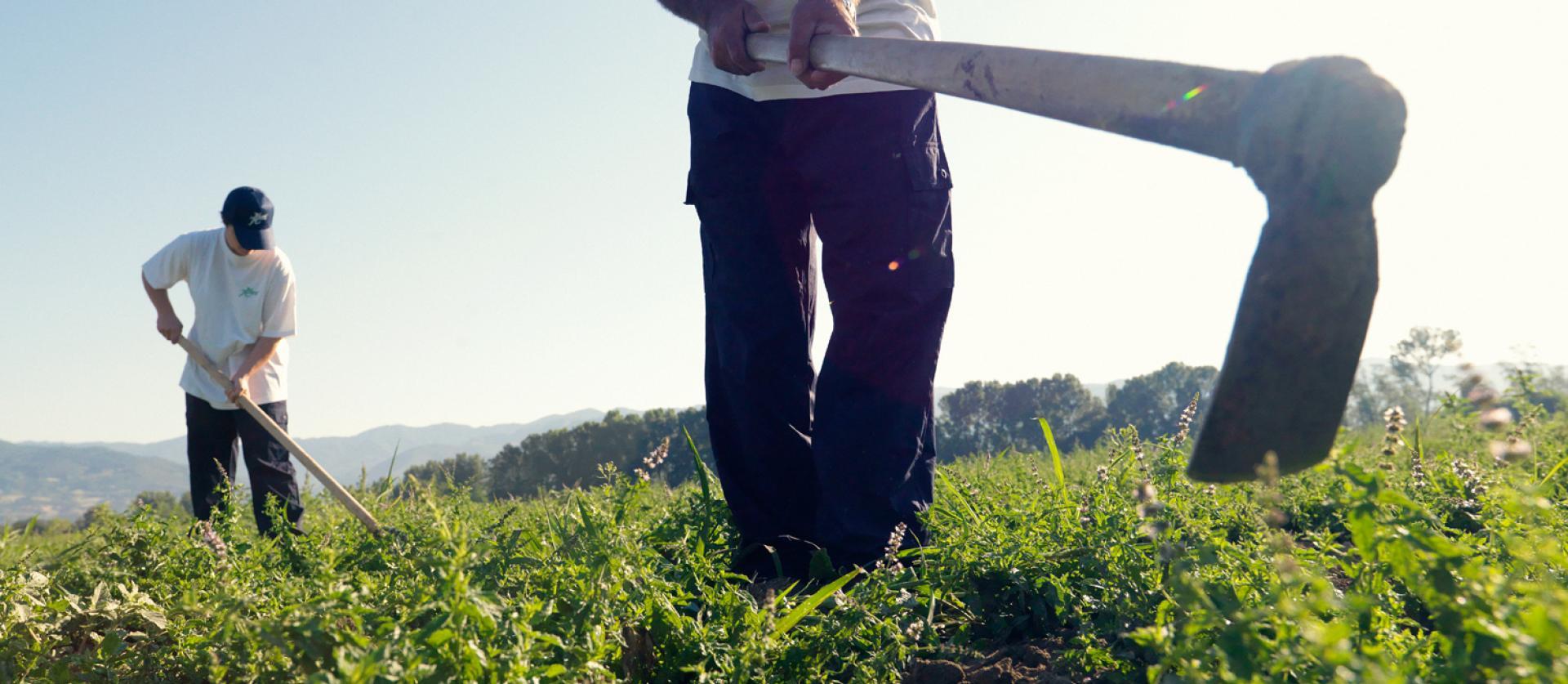 Área de la agricultura